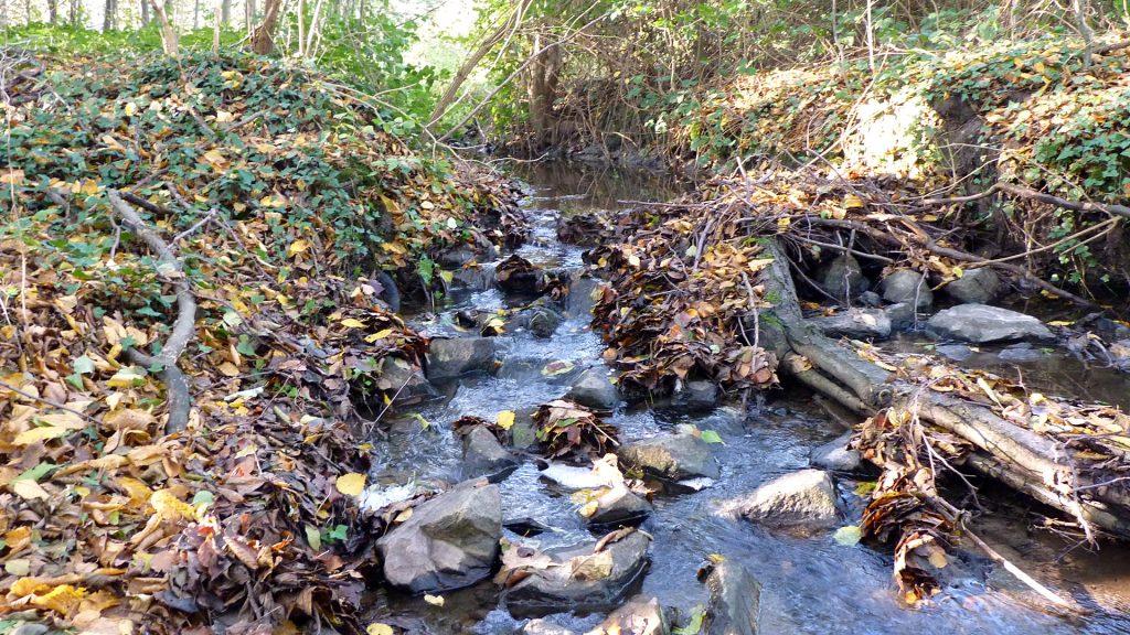 Naturschutzgebiet Sudbachtal