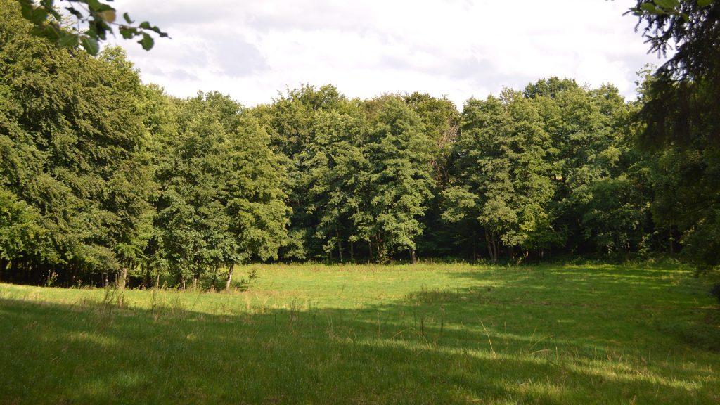 Naturschutzgebiet Turenbusch